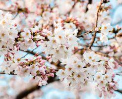 【Minpaku Supportersブログ】3月20日は春分の日ですね!